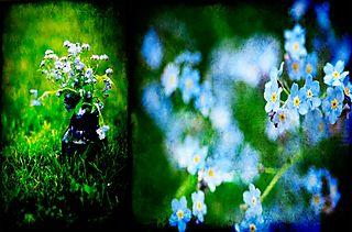 Flower storyboard